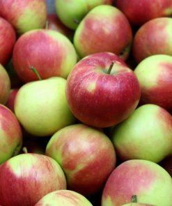 Elstar Mini Äpfel 10 kg
