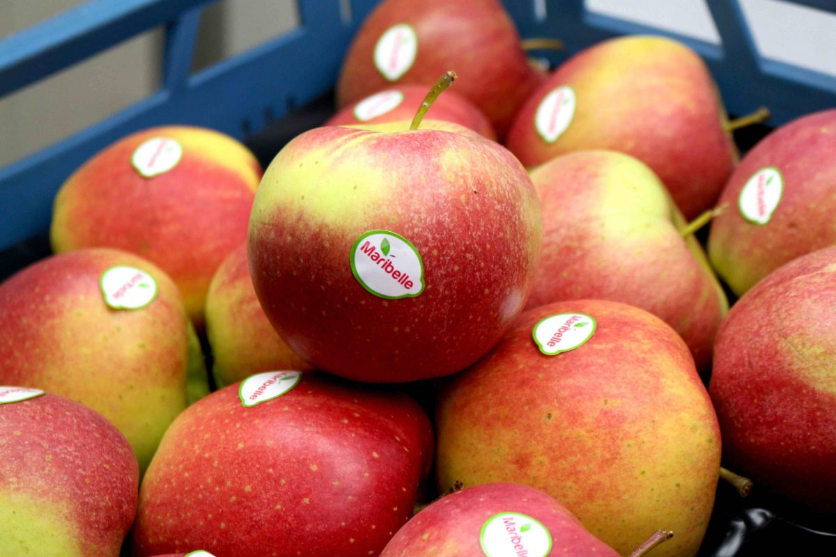 Mirabelle Apfel Kiste 7 kg