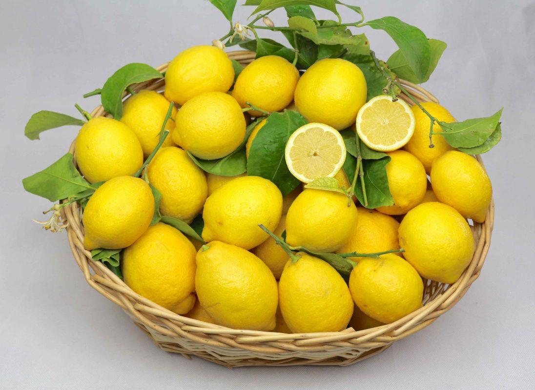 Zitronen mit Blat